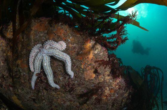 top-5-underwater-species-to-photograph-in-the-uk