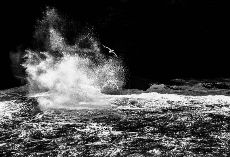 Albatross flying in stormy sea