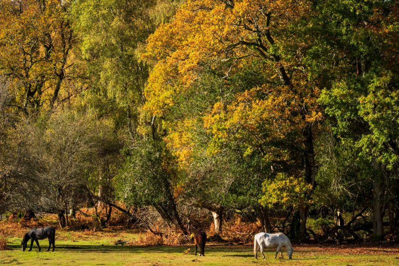 Millyford New Forest